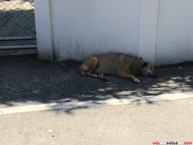 Soi Dog Thailand